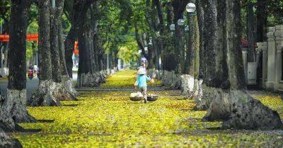 Lá vàng rơi vào thu Hà Nội