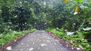 Bướm rừng lộng lẫy ở Vườn quốc gia Cúc Phương
