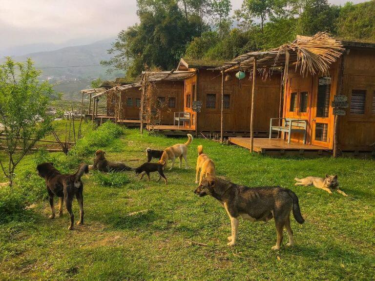 Utopia Eco Lodge - Hầu Thào