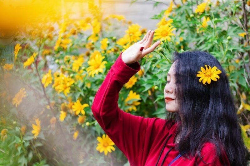 hoa dã quỳ đà lạt đẹp