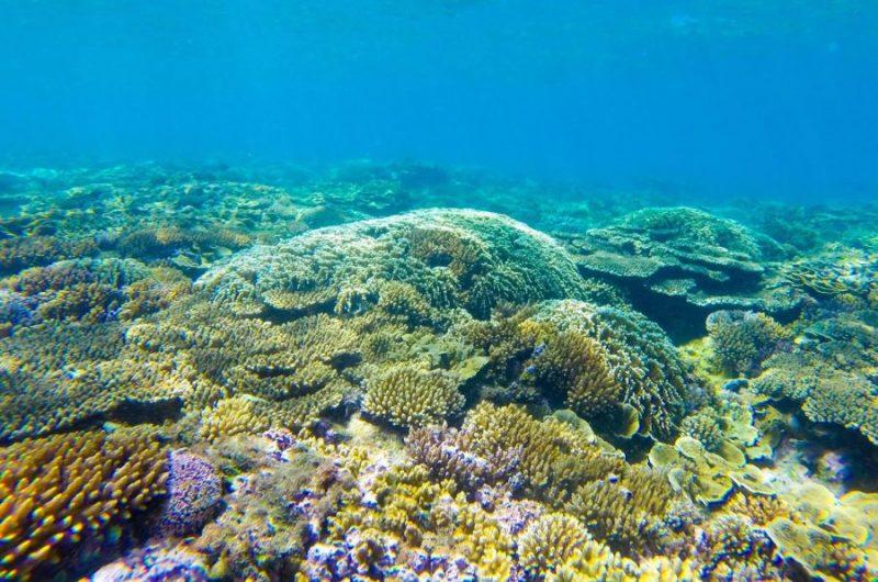 xem san hô