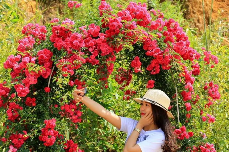 tạo dáng bên hoa hồng