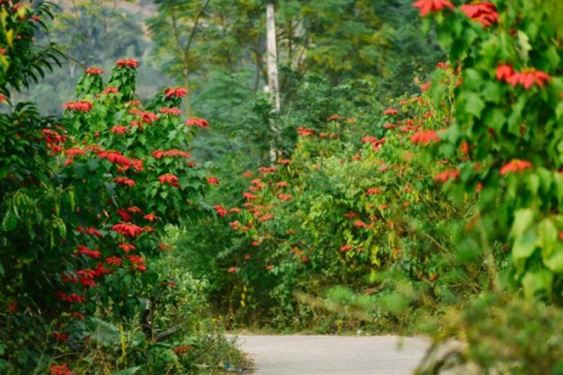 Những bông hoa trạng nguyên rực đỏ