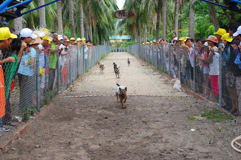 đua chó ở đảo khỉ