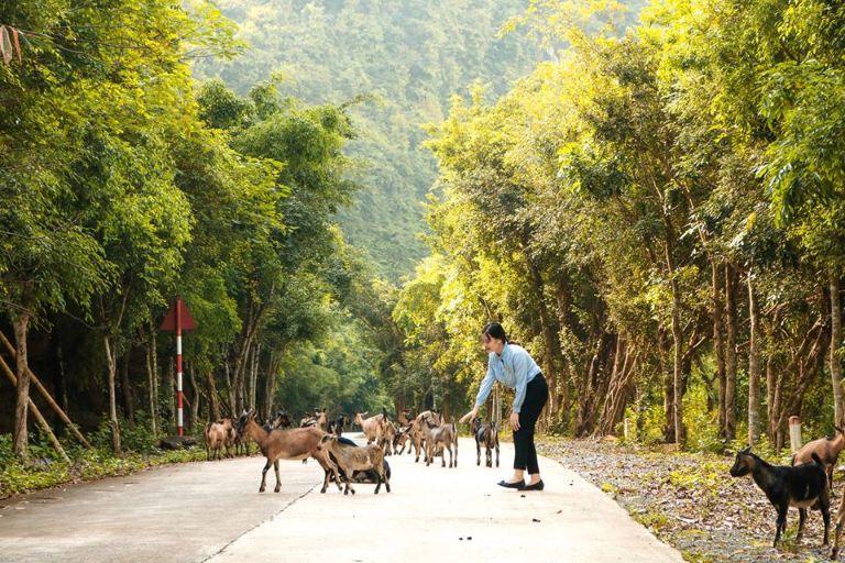 Khu bảo tồn chim Thung Nham, Ninh Bình