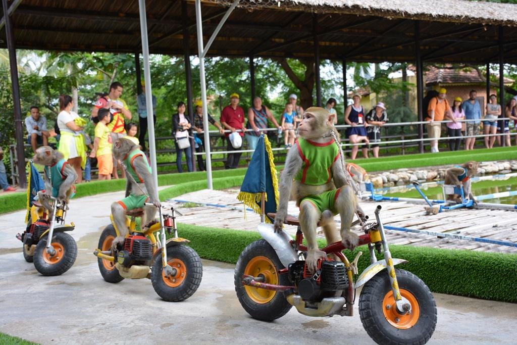 Đảo khỉ - Nha Trang