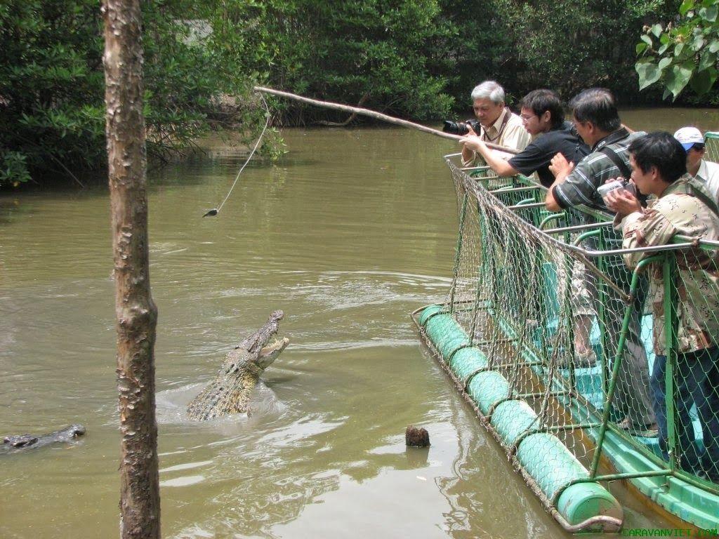 Cá sấu ở gần