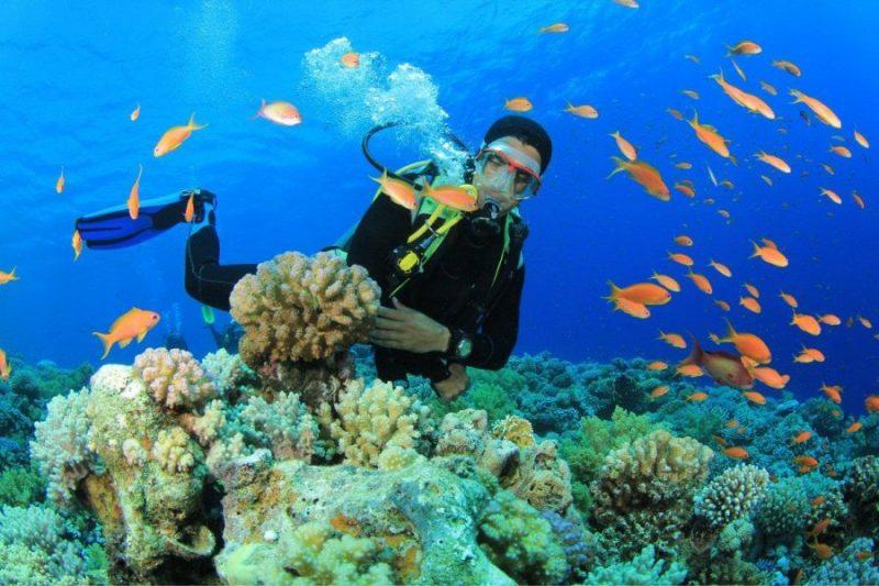 rặng san hô nha trang
