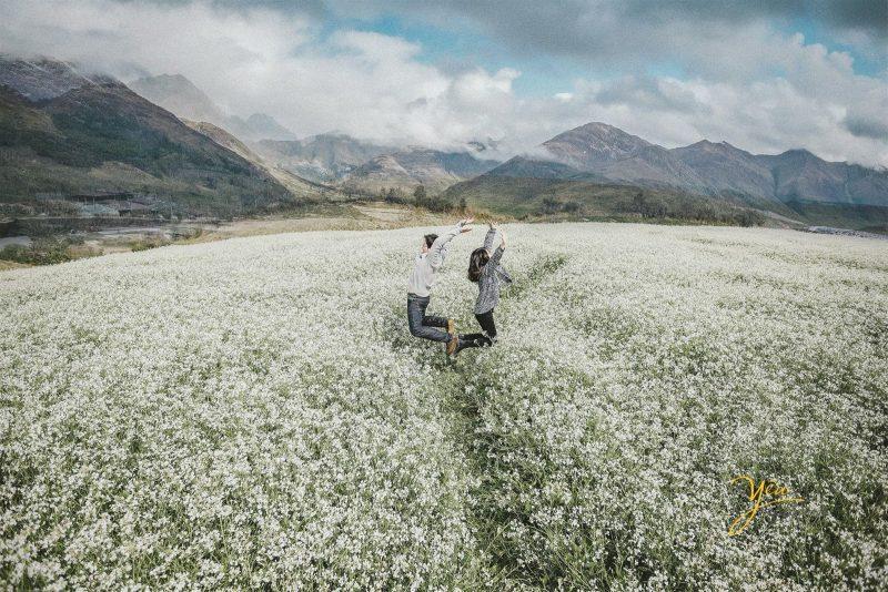 Hoa cải nở trắng xóa Mộc Châu