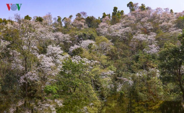 Điện Biên mùa hoa ban trắng