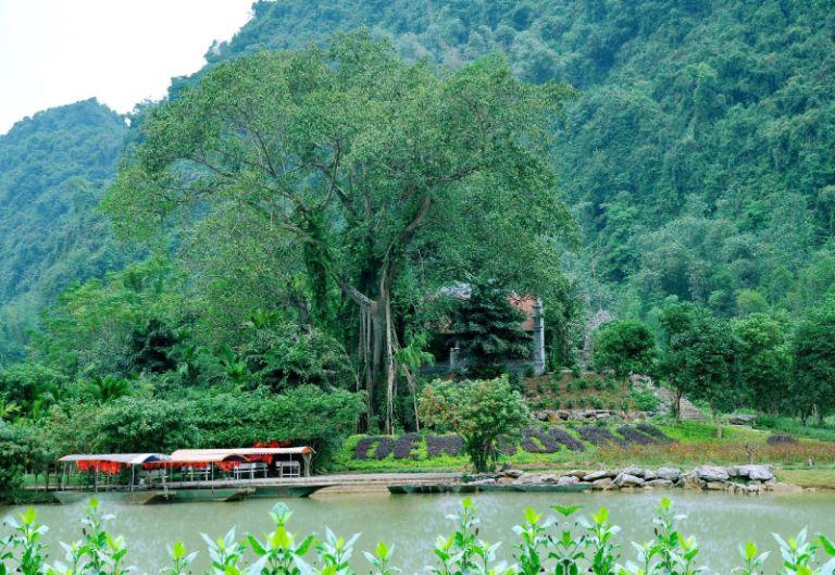 Thung Nham di chuyển cây đa