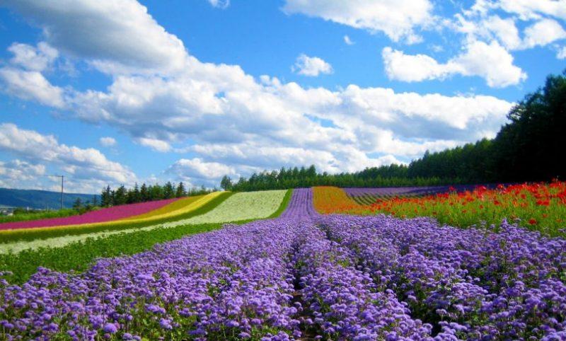hoa vạn thành
