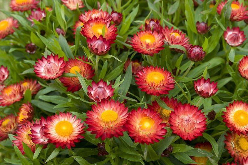 Vườn hoa bất tử Đà Lạt