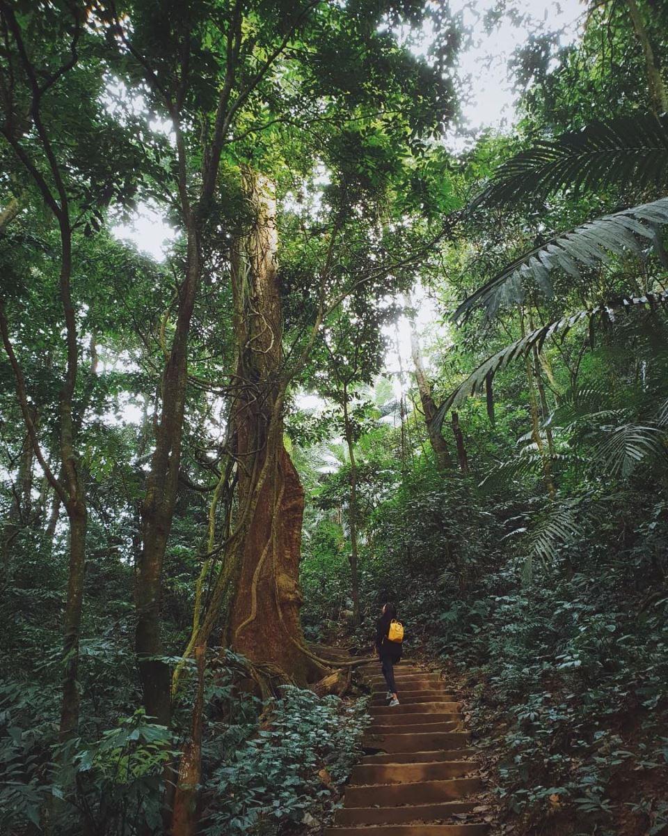 rừng nguyên sinh