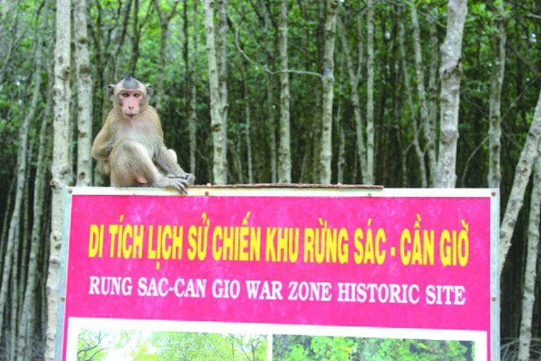 khu di tích lịch sử chiến khu rừng sác - cần giờ