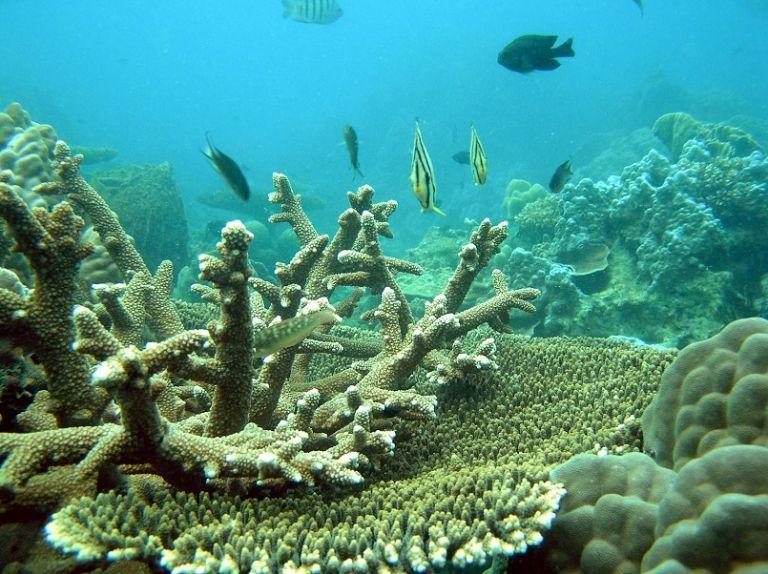 dịch vụ ngắm san hô
