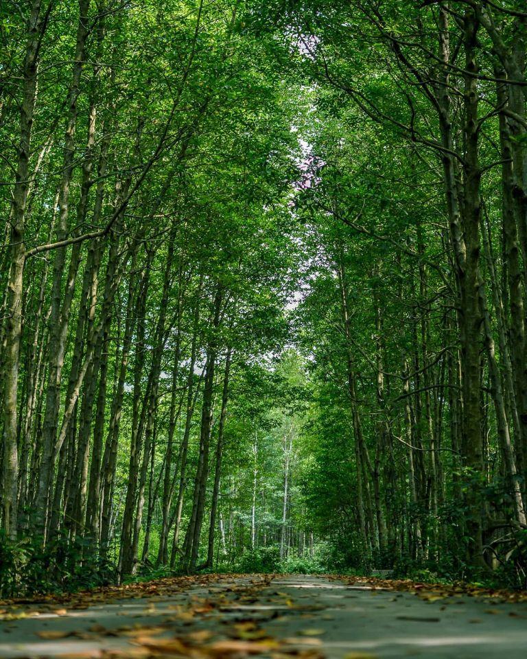 Cảm giác được chạy xe máy dưới con đường xanh này thật tuyệt vời phải không?