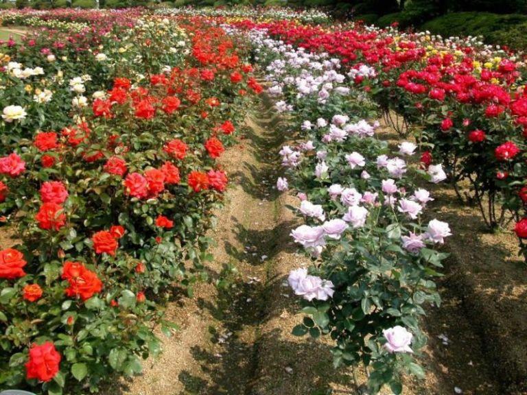 Thung lũng hoa Sapa