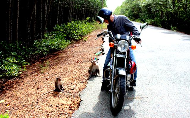 Đi xe máy tại đảo khỉ