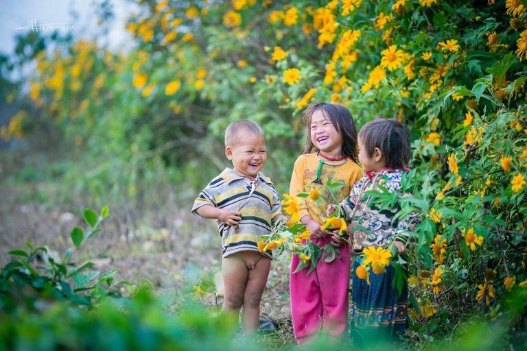 mộc châu mùa hoa dã quỳ