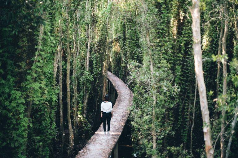 Vàm Sát con đường giữa rừng