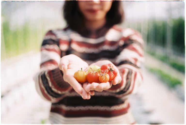 """Nông trại là địa điểm bạn nên thêm vào lịch trình phượt Măng Đen. Măng Đen có khí hậu ôn đới và được mệnh danh như """" khu vườn Đà Lạt """" của Tây Nguyên. Ở đây có nhiều khu nhà lồng hữu quan trồng các loại như: nhiều giống cà chua, dâu, cherry; hoa lan, hoa đồng tiền,..."""
