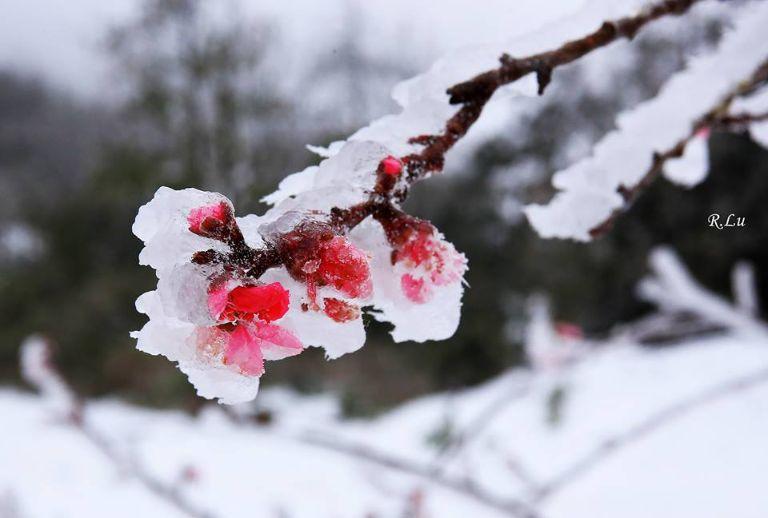 hời điểm tuyết rơi ở Y Tý trùng với Sapa, thường thì sẽ vào khoảng tháng 12 - tháng 1 hàng năm. Đa phần ở đây là những cơn rét đậm, nhiều nơi sẽ còn để lại những lớp băng mỏng.