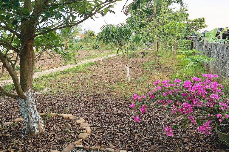 Homestay Nhà Vườn Đất Muối Đồ Sơn