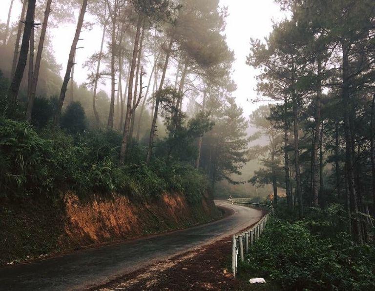 Rừng thông Yên Minh vào sáng sớm