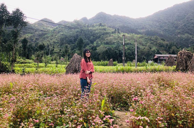Những cánh đồng hoa Tam Giác Mạch quanh Sủng Là
