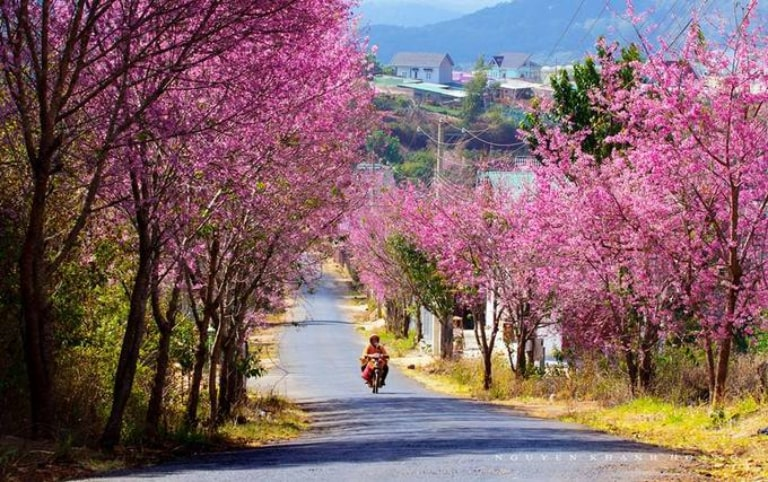 Du lịch Đà Lạt tự túc không nên bỏ qua các mùa hoa tại đây
