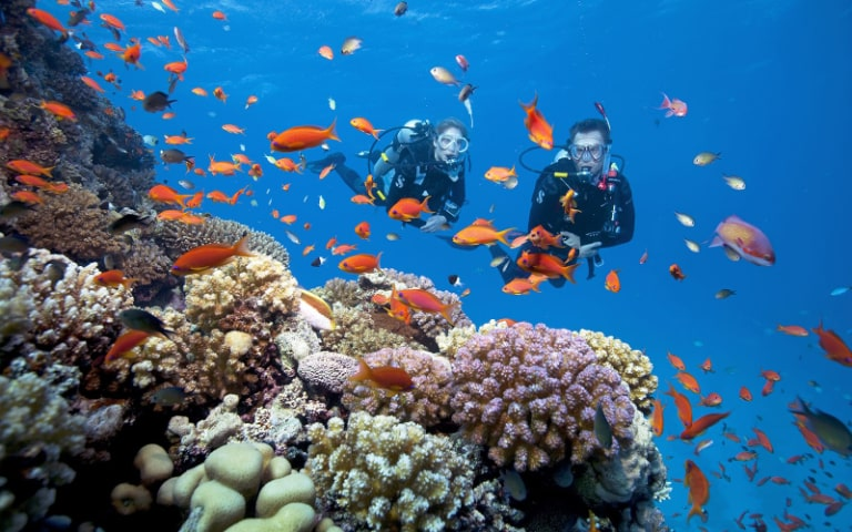 Những rạn san hô tuyệt đẹp