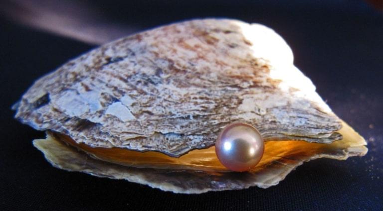 Ngọc trai ở đảo ngọc nổi tiếng khắp nơi