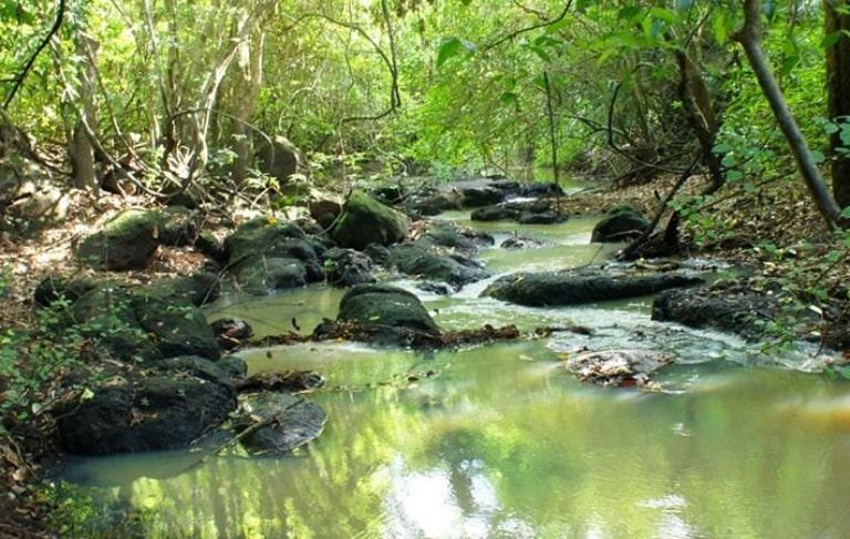 Các sinh vật sinh sống ở vườn quốc gia Phú Quốc rất đa dạng