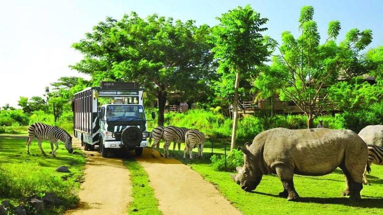 Rất nhiều loài động vật được nuôi dưỡng ở công viên thú Safari Phú Quốc
