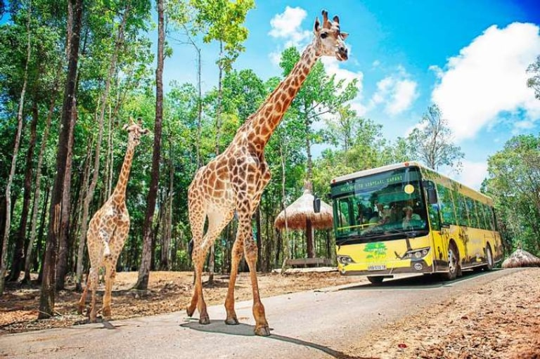 Tích lũy kinh nghiệm của mọi người để khám phá trọn vẹn Vinpearl Safari ở Phú Quốc