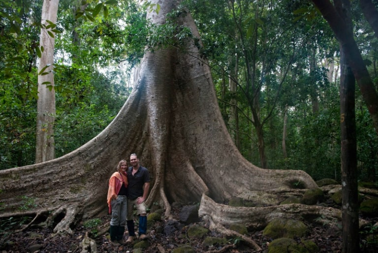 The big trees have roots as big as many adult arms