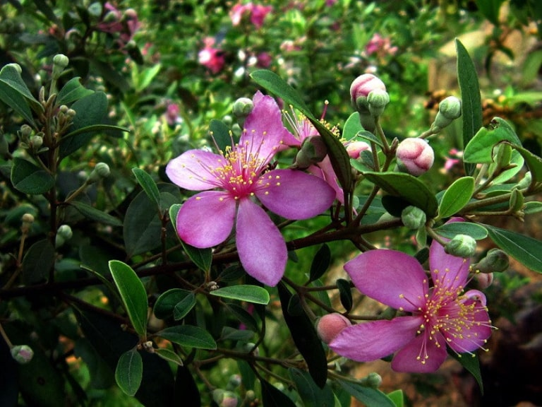 The vibrant purple myrtle forests are really outstanding and impressive