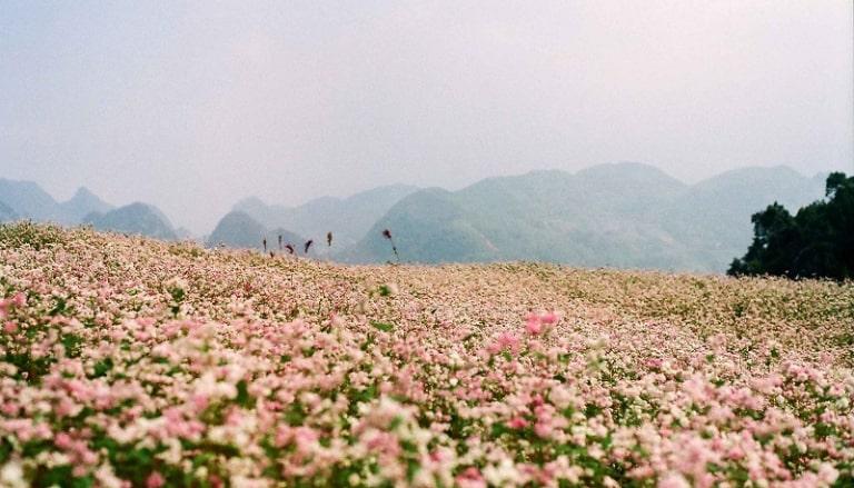Địa điểm được nhắc đến nhiều trong kinh nghiệm du lịch tại Đà Lạt