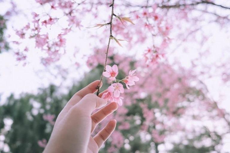 Vẻ đẹp của thành phố Đà Lạt qua các mùa hoa