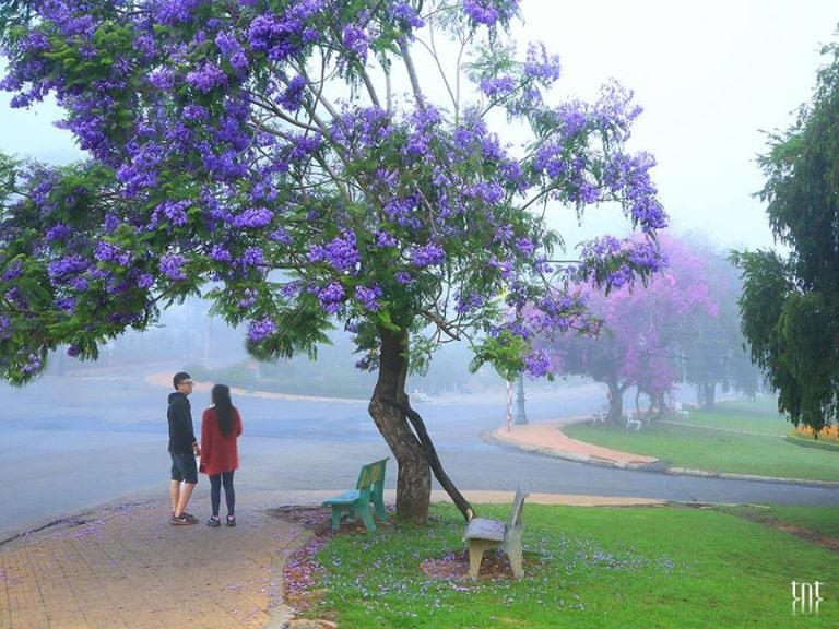 Khung cảnh lãng mạn với sắc tím hoa phượng