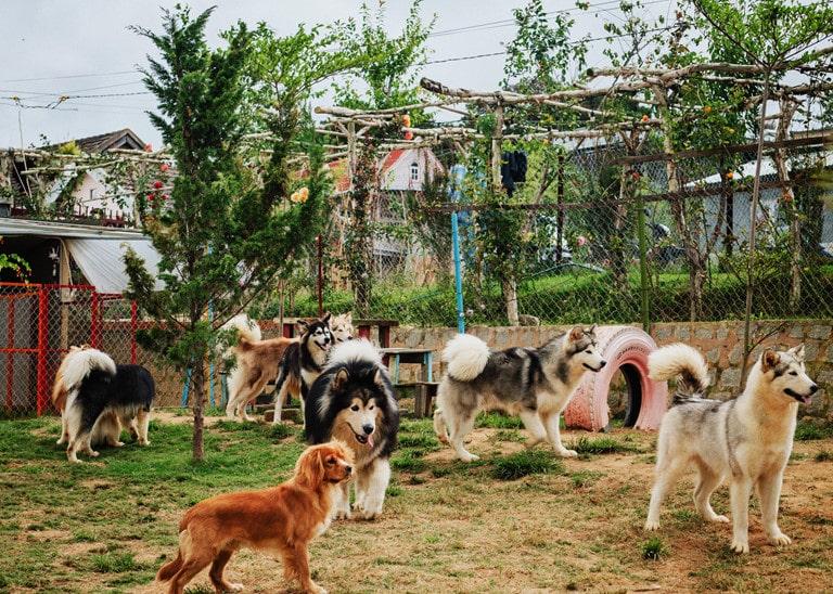 Bạn biết được những thông tin gì về trại chó Đà Lạt