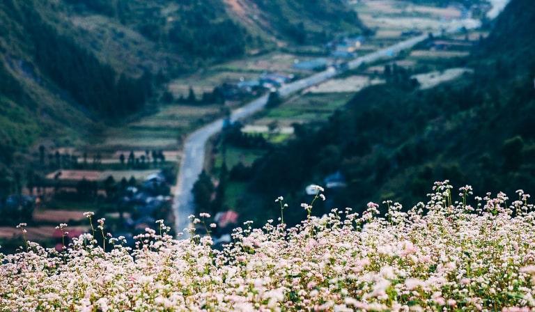 Loài hoa đặc trưng tại Hà Giang