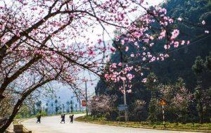 Du lịch Hà Giang mùa nào đẹp nhất? Mùa xuân tại Hà Giang