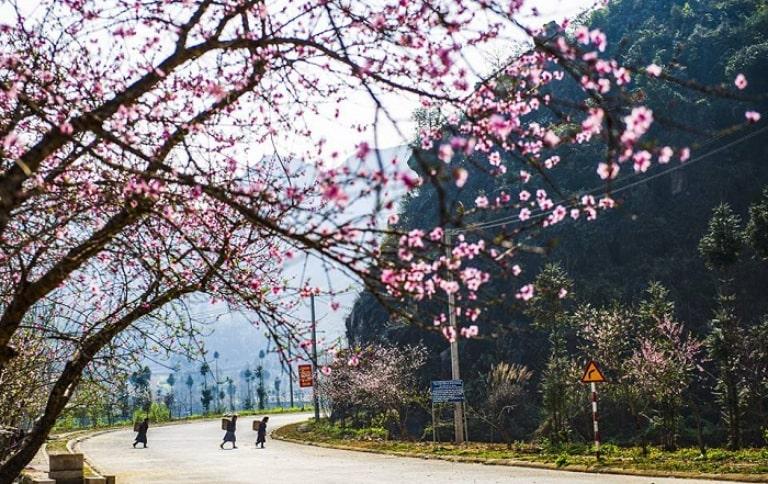Đi du lịch Hà Giang mùa nào đẹp nhất?  Mùa xuân ở hà giang
