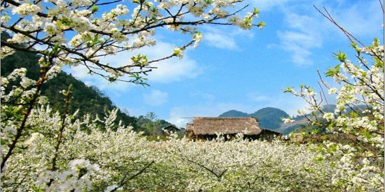 Mùa nào ở Hà Giang cũng đẹp và cũng thu hút du khách