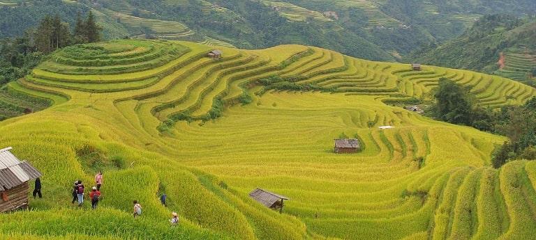 Du lịch Hà Giang mùa lúa chín cần tránh đi vào dịp cuối tuần