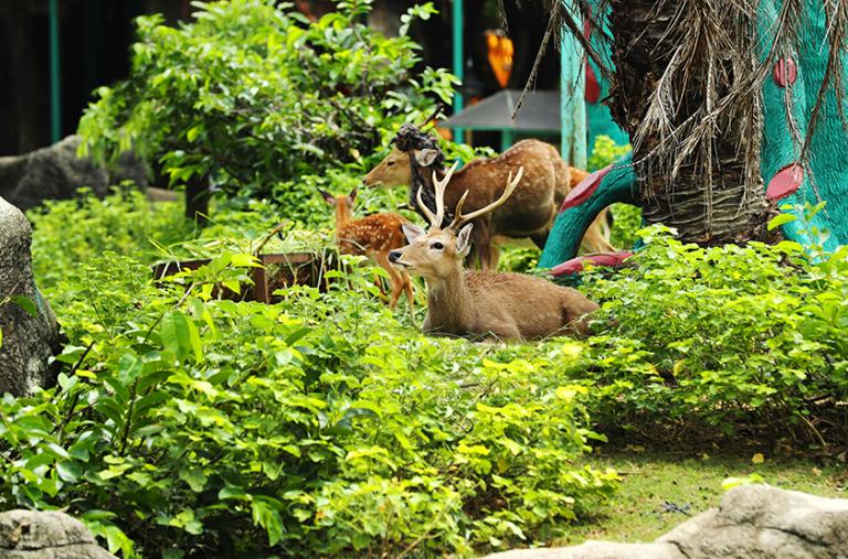 Vườn thú với nhiều loài động vật quý hiếm